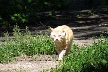 Business Cat №22409