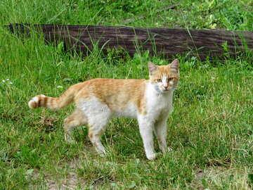 Cat №22406