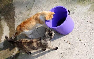 Cats drop in the bucket №22421