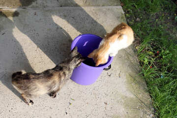 Cats and bucket of fish №22414