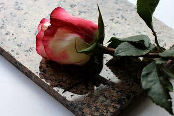 Letzte Blume №22818