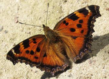 Bright butterfly background on desktop №22265