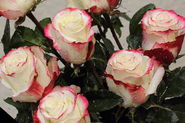 Chic Rose Sfondi desktop №22780
