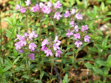 Simple flowers №22513