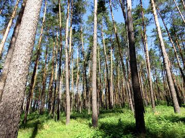 Walk in the Woods №22526