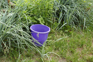 A bucket in the bushes №22439