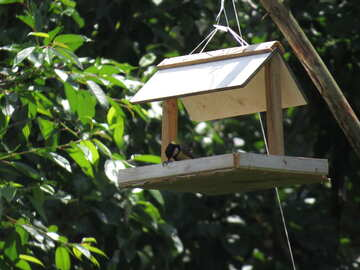 Bird in the trough №22895