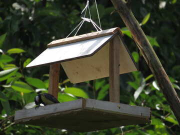 Bird in the trough №22912