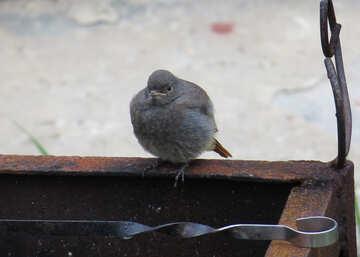 Angry Bird №22925