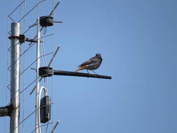Bird on anntene №22883