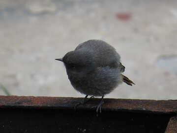 A curious bird №22927