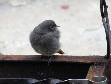 Skewers of birds №22923