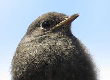 Small bird №22915