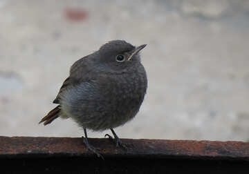 Young bird №22930