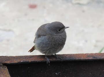 Birdie №22926