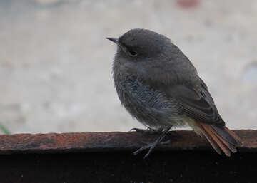 Birdie round №22929