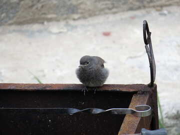Chick №22922