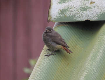 Small bird №22933