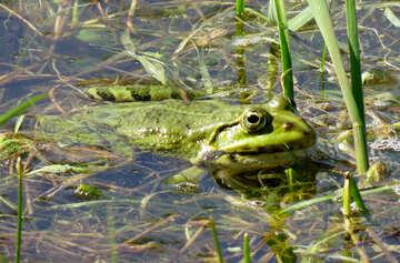 Frog hunting №22224