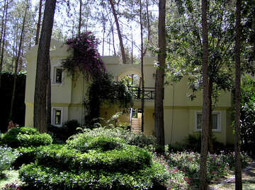 A small hotel in the woods №22073
