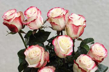 Rose №22775