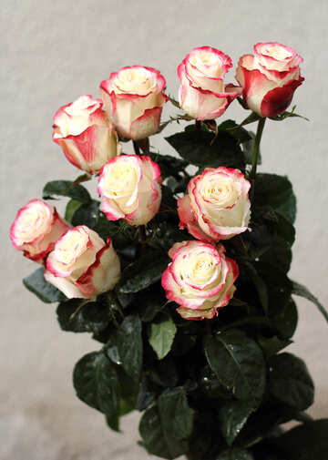 Bouquet di Rose №22776