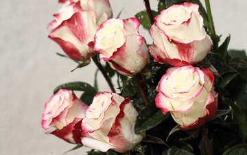 Rose per carte №22785