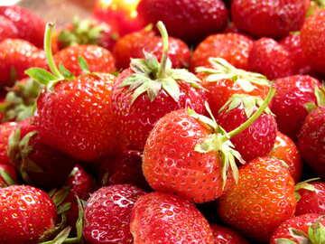 Strawberry picking season №22377