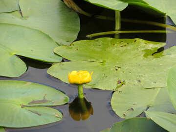La flor crece en agua №22443