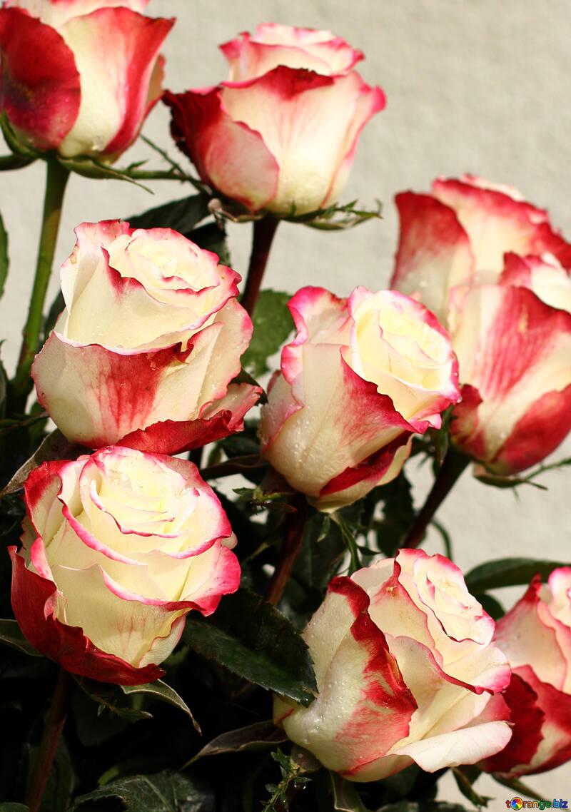 Rose di sfondo №22789