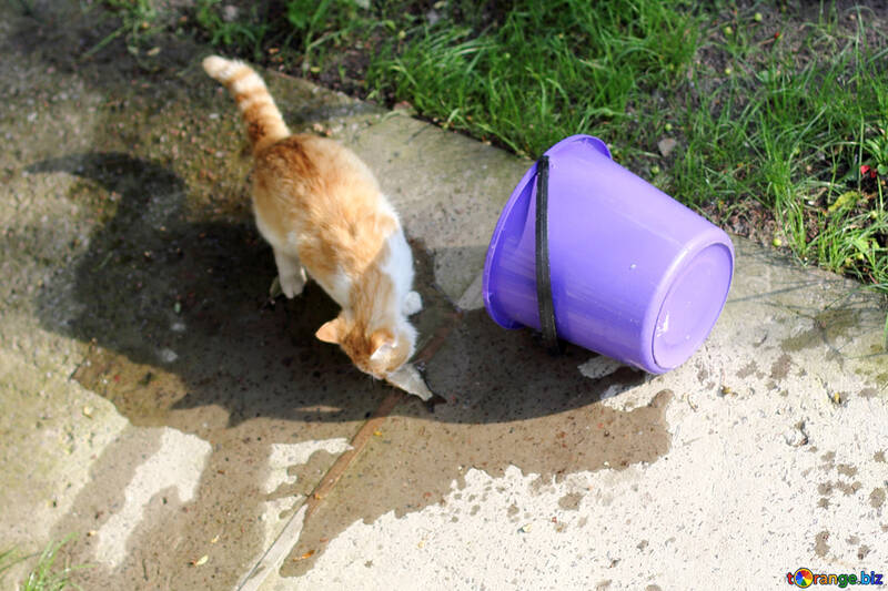 Cat stole the fish from the bucket №22410