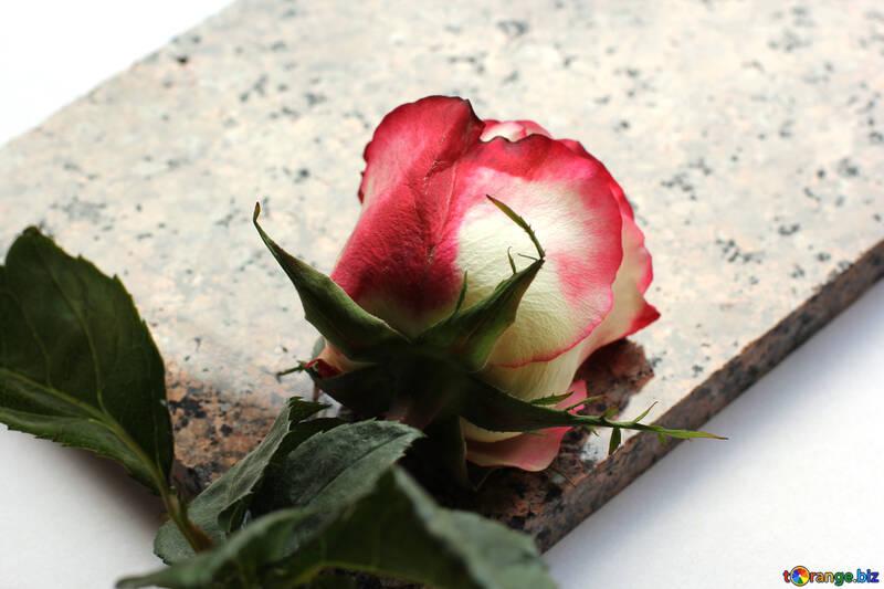 Цветок на каменной плите №22819