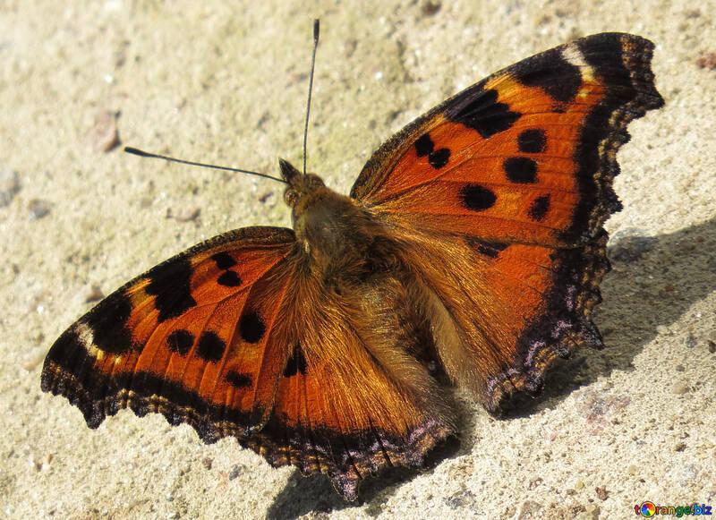 Fondo brillante mariposa en escritorio №22265