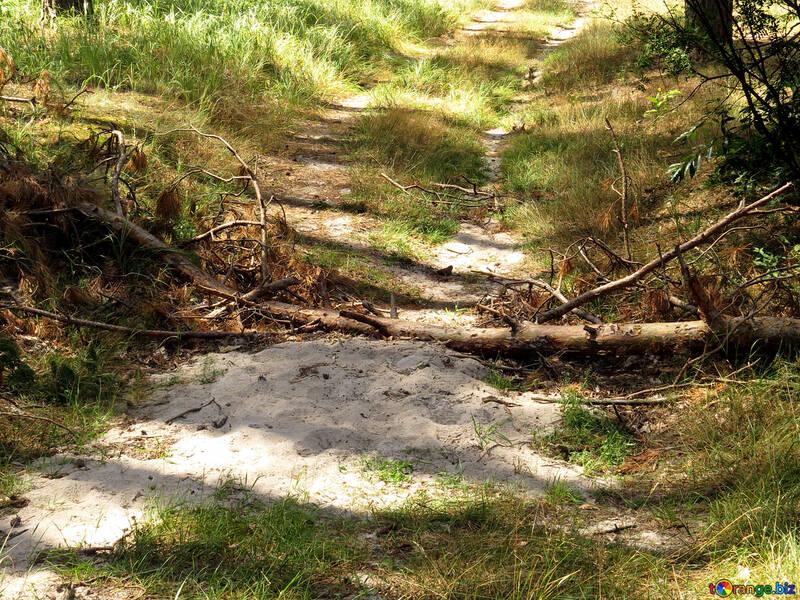 Fallen tree blocked the road №22538