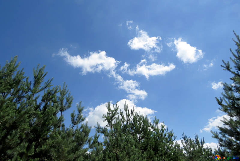 The sky in the woods №22494