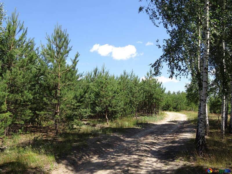 Strada forestale №22471