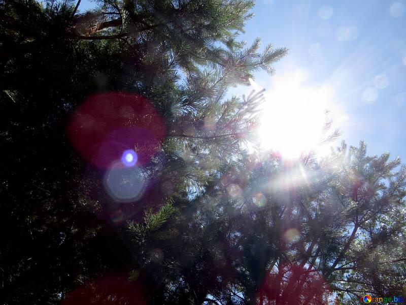 Forêt ensoleillée №22507