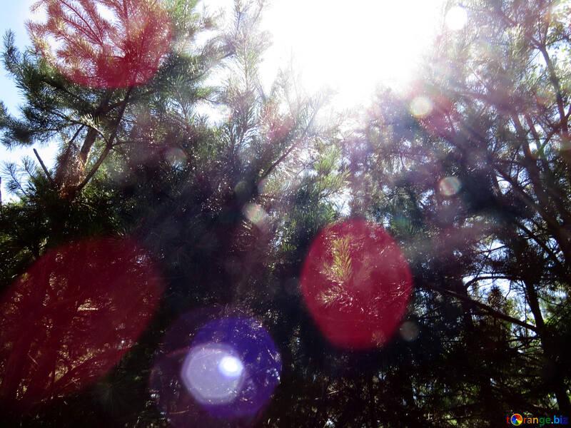 El sol en el bosque №22506