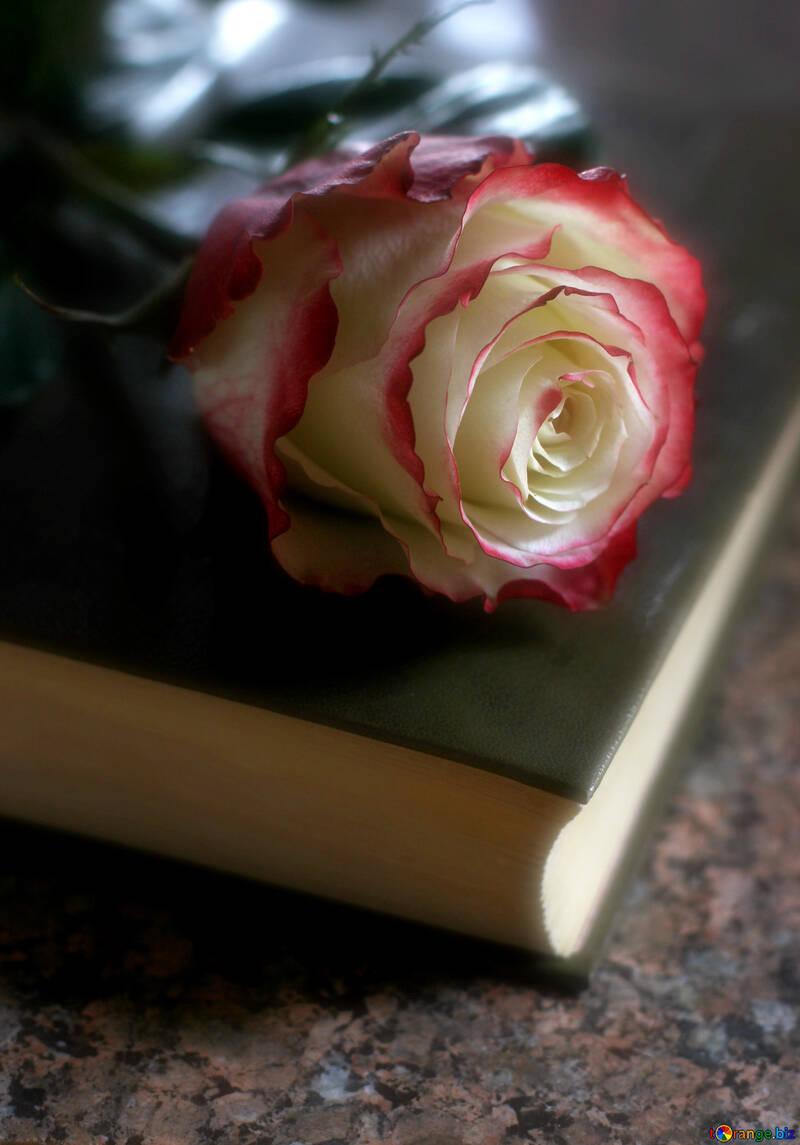 Стихи про любовь №22802