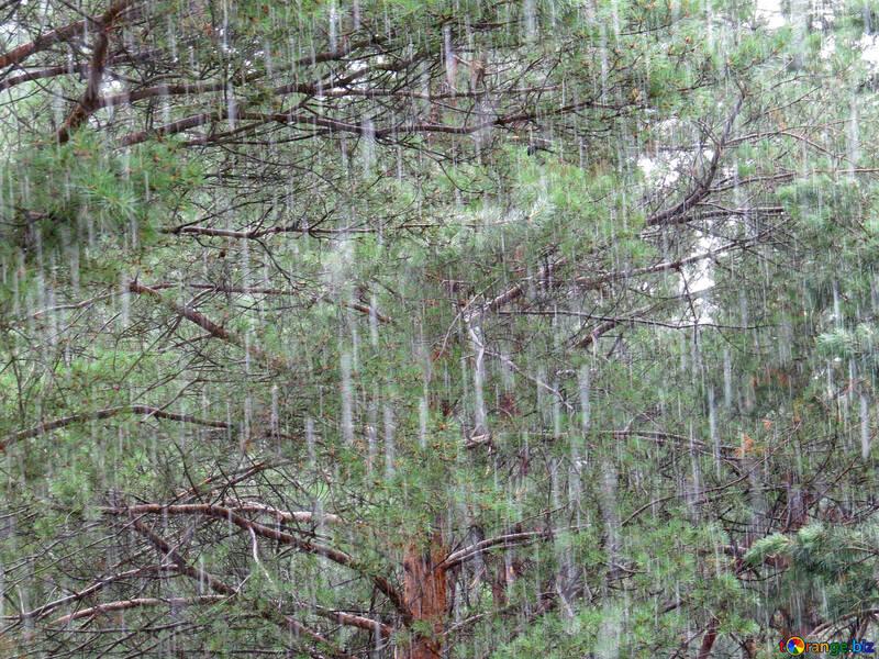 Herbst Regen №22297