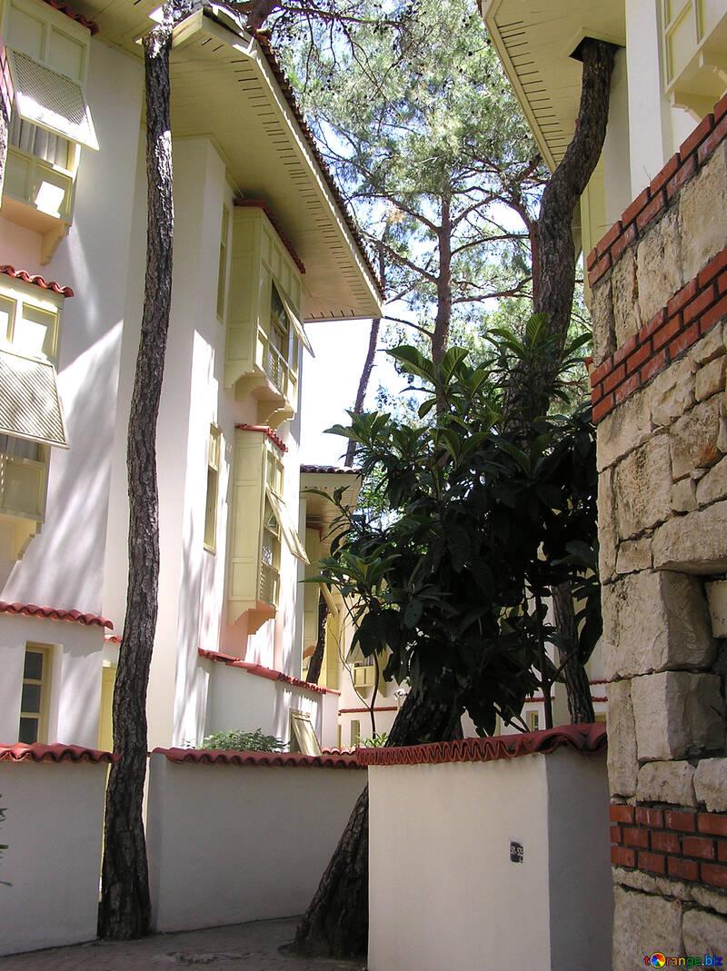 Un árbol crece través del techo de la casa №22042