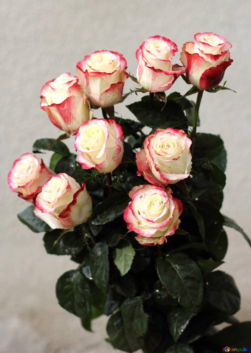 Ramo de rosas №22776
