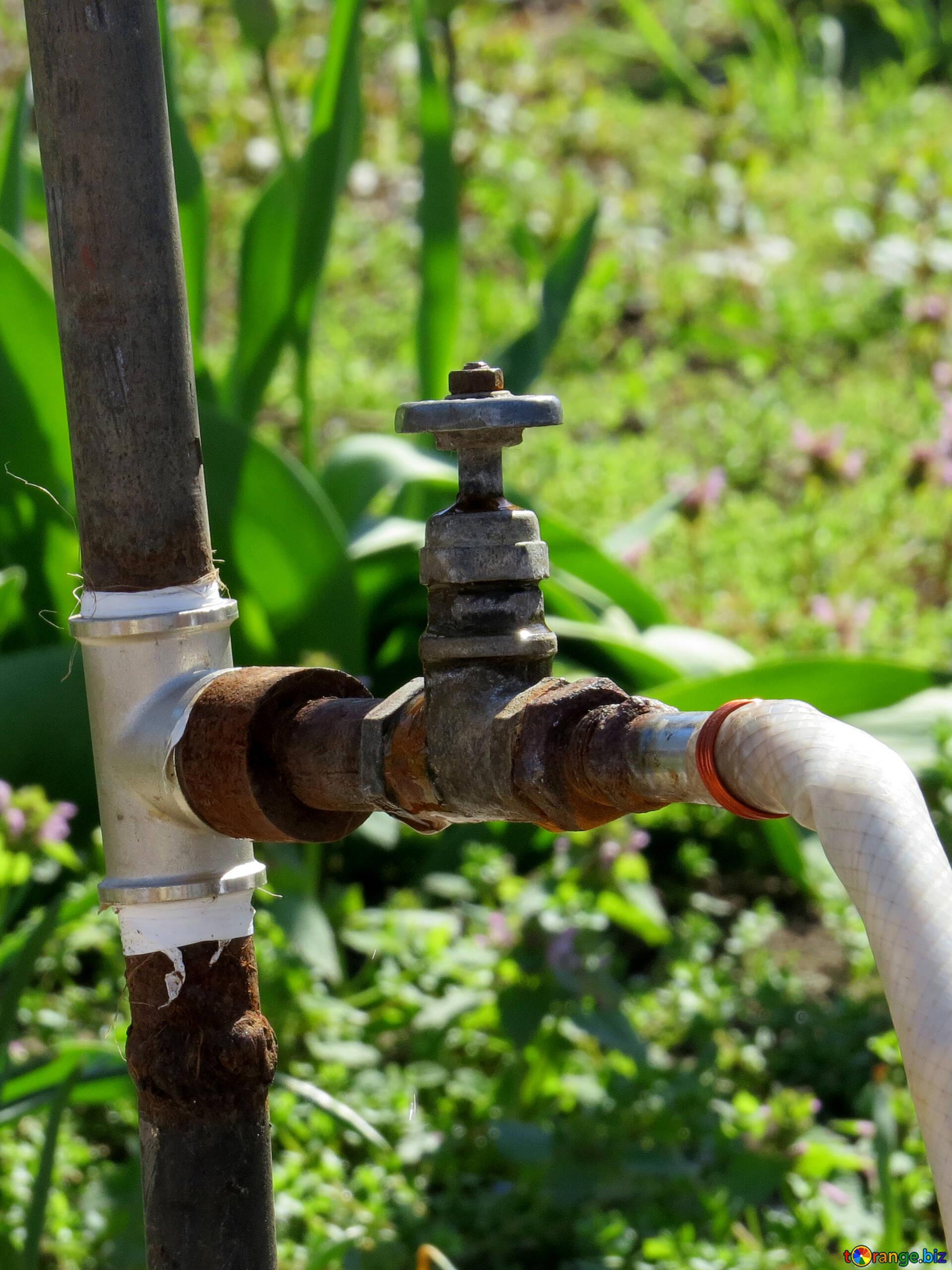 Watering Plants Tap Water Drop 23879