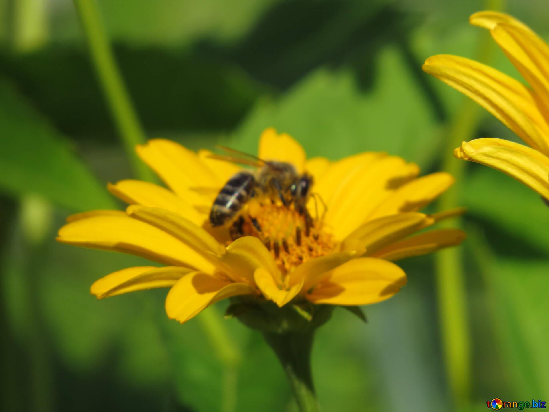 где картинки пчелы на липецк ближайшие дни
