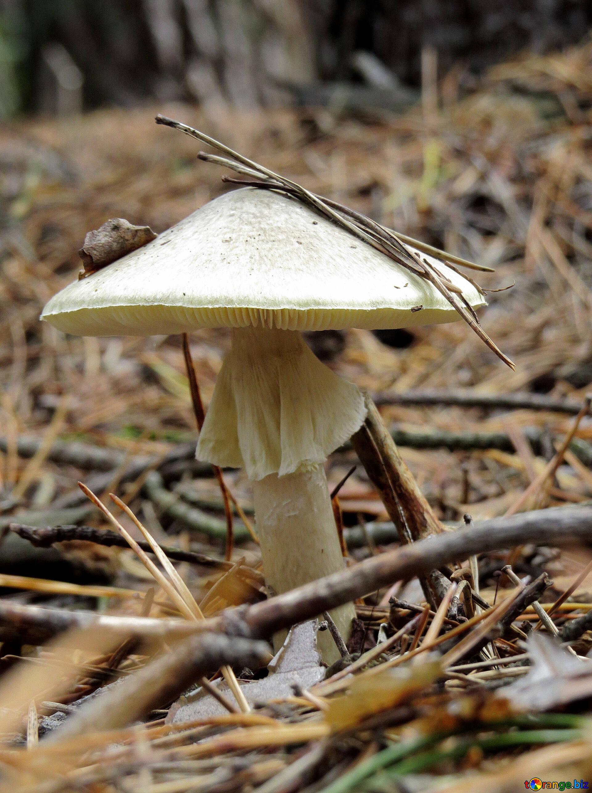 исключение, ядовитые грибы якутии картинки сценарии гоцман был