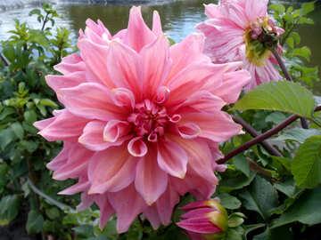 Fiore d`autunno №23396