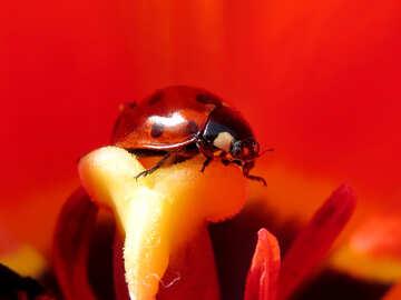 Ladybug №23523