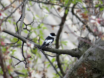 Bird white with black №23890