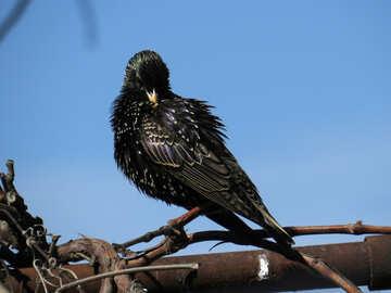 Bird preens feathers №23986