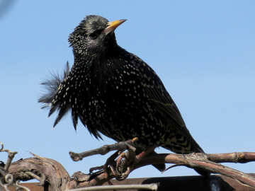 Bird preens feathers №23992